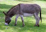 Donkey_1_arp_750px-1