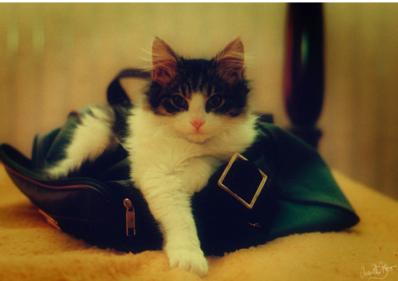 Kitten_cute