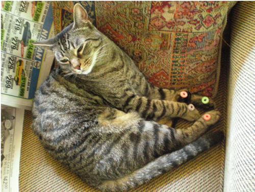 Cat-froot-loops