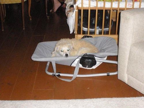 Wipstoel 02-08-2008 001