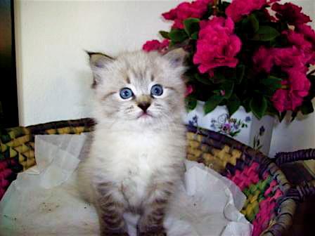 Kitten_PARIS_Catarina.2