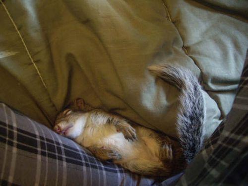 CrotchSquirrel1_Ontario_Toni