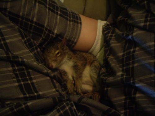 CrotchSquirrel2_Ontario_Toni