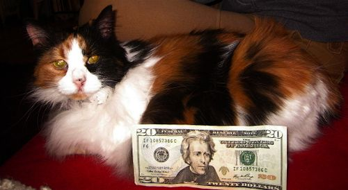 D-cash