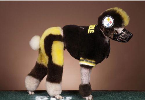 Steez Poodle