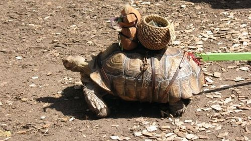 Tortoise_MINNEAPOLIS_Sara