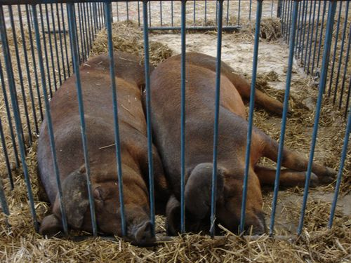 Sync Sleeping Pigs_Detroit_Eric