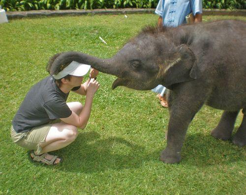 Elephant-PHUKET-Donna