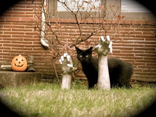 Gloria-Halloween2005