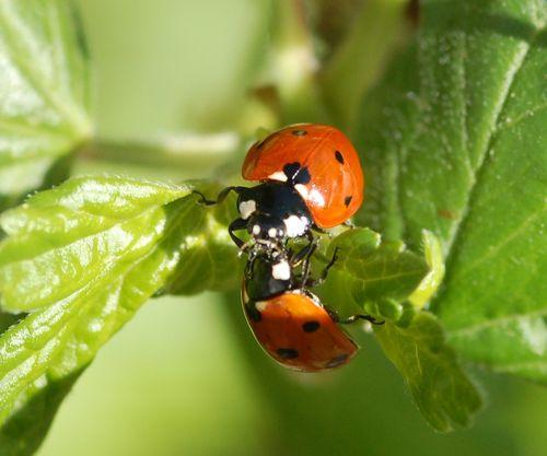 Bug_Holland_Lyanne 1