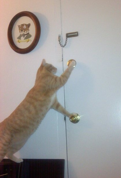 Cat_opens_door_lock