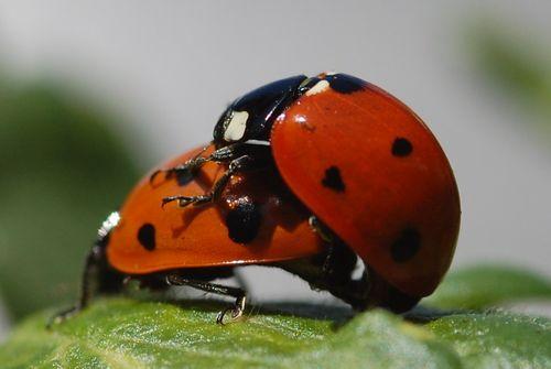 Bug_Holland_Lyanne 2