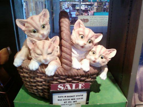 Basketofcats