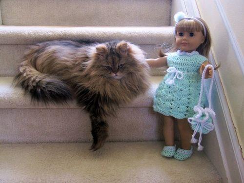 Dollcat