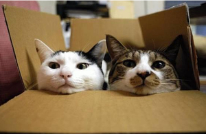 Catbox_marcia_denver
