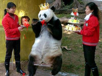 Pandaface_nicole
