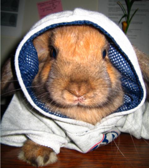 Lou_bunnyhug