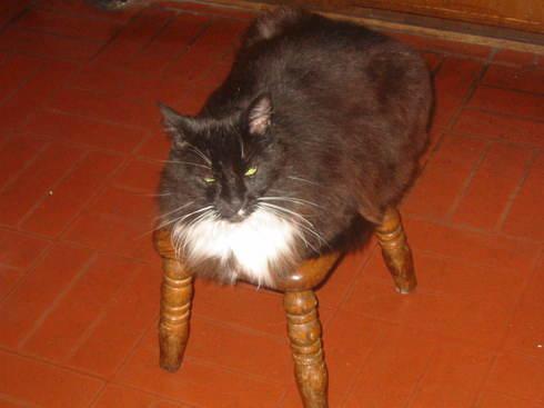Cat_daniel_peg
