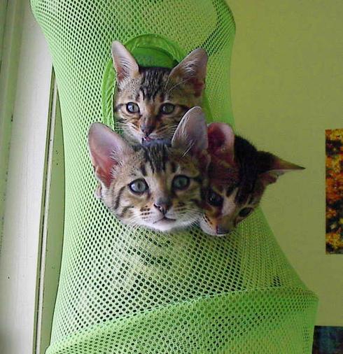 Bag_kittens