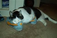 Spartshoes